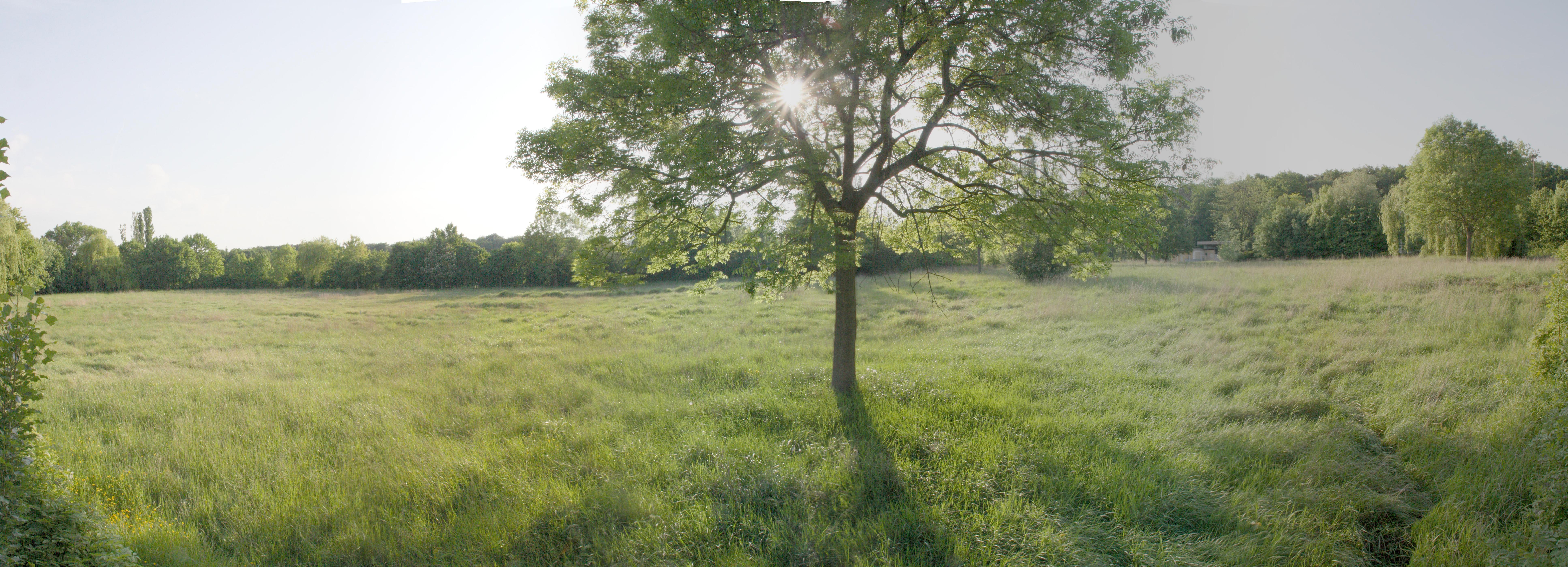 Tambourbad - Liegewiese