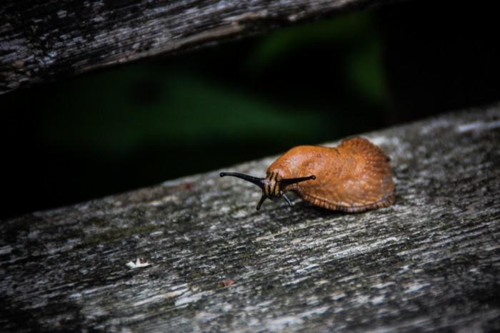 Die Schnecke im Waldzoo