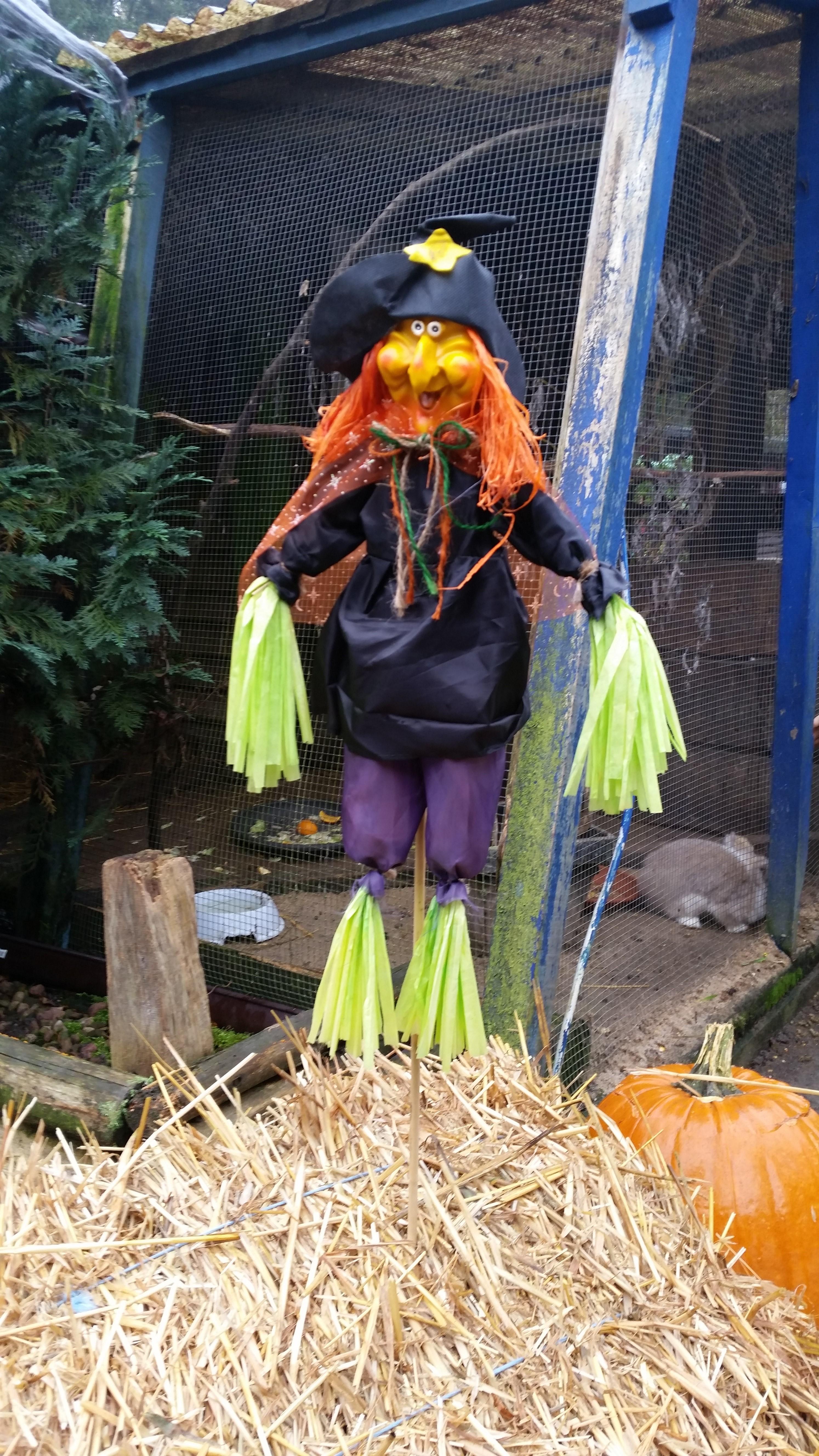 Halloween im Waldzoo